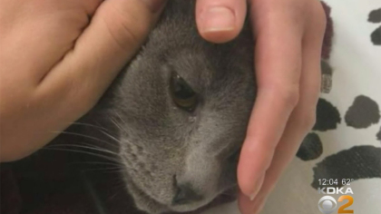 ollie cat killed Family Wants Answers After Cat Fatally Shot With Arrow