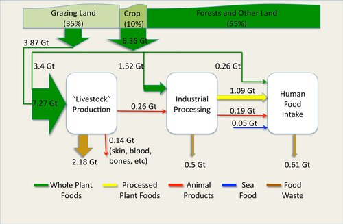 """Fig. 4.2. Biomass flows, in Gigatons of dry matter biomass per year, through the Animal Agriculture sector, showing how """"Livestock"""" are consuming 4.5 times as much food as all humans. Source  IPCC AR5 WG3 Chapter 11, Fig 11.9, page 836 ."""